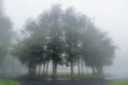 Foggy Front Entrance