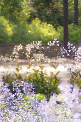 Serenity Garden 1
