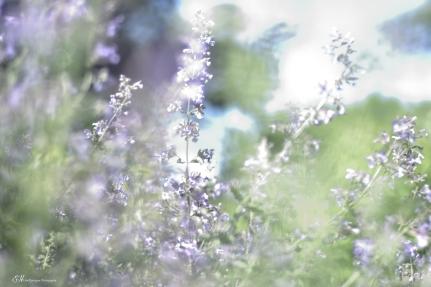 Serenity Garden 4