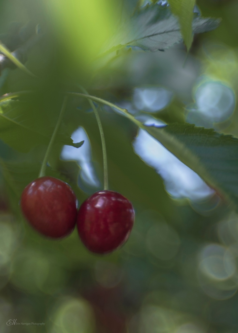 a pair of cherries wm