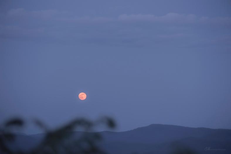 afton Moon 2 wm