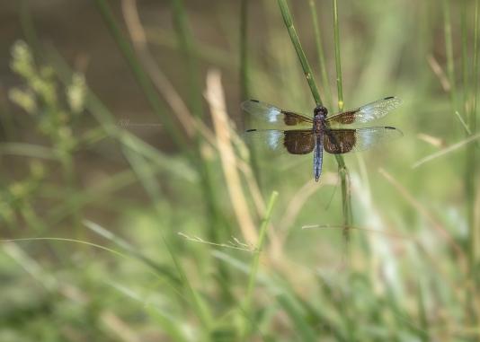 dragonfly 3 wm
