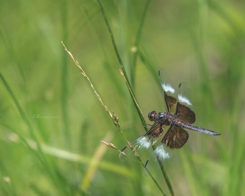 dragonfly 4 wm