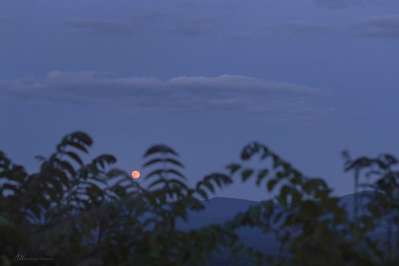 moon mountain trees wm