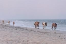 beach horses 2