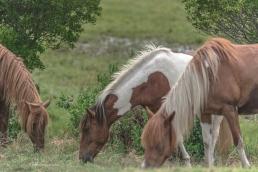 horse trio wm