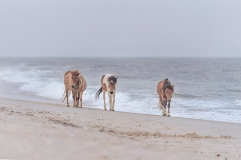 horses along the beach 2