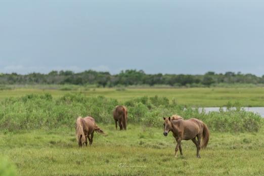 horses trio field wm