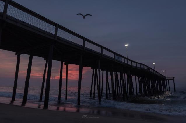 sunrise bird wm