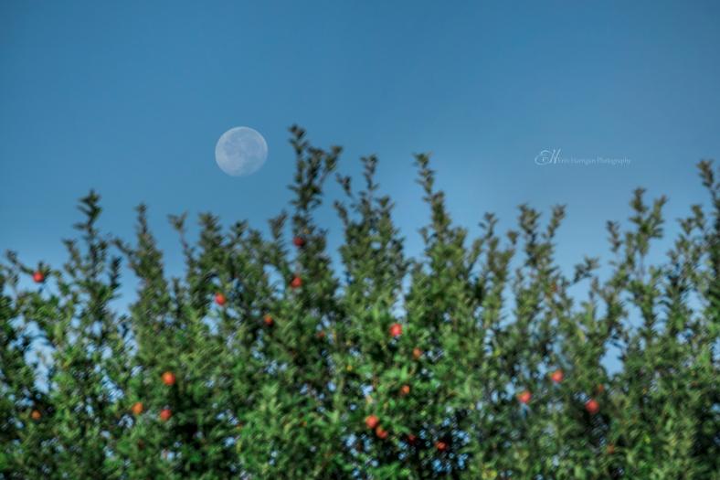 Apple Moon wm