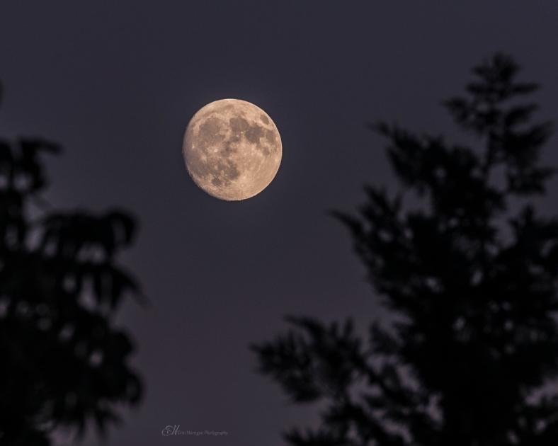 This moon tonight