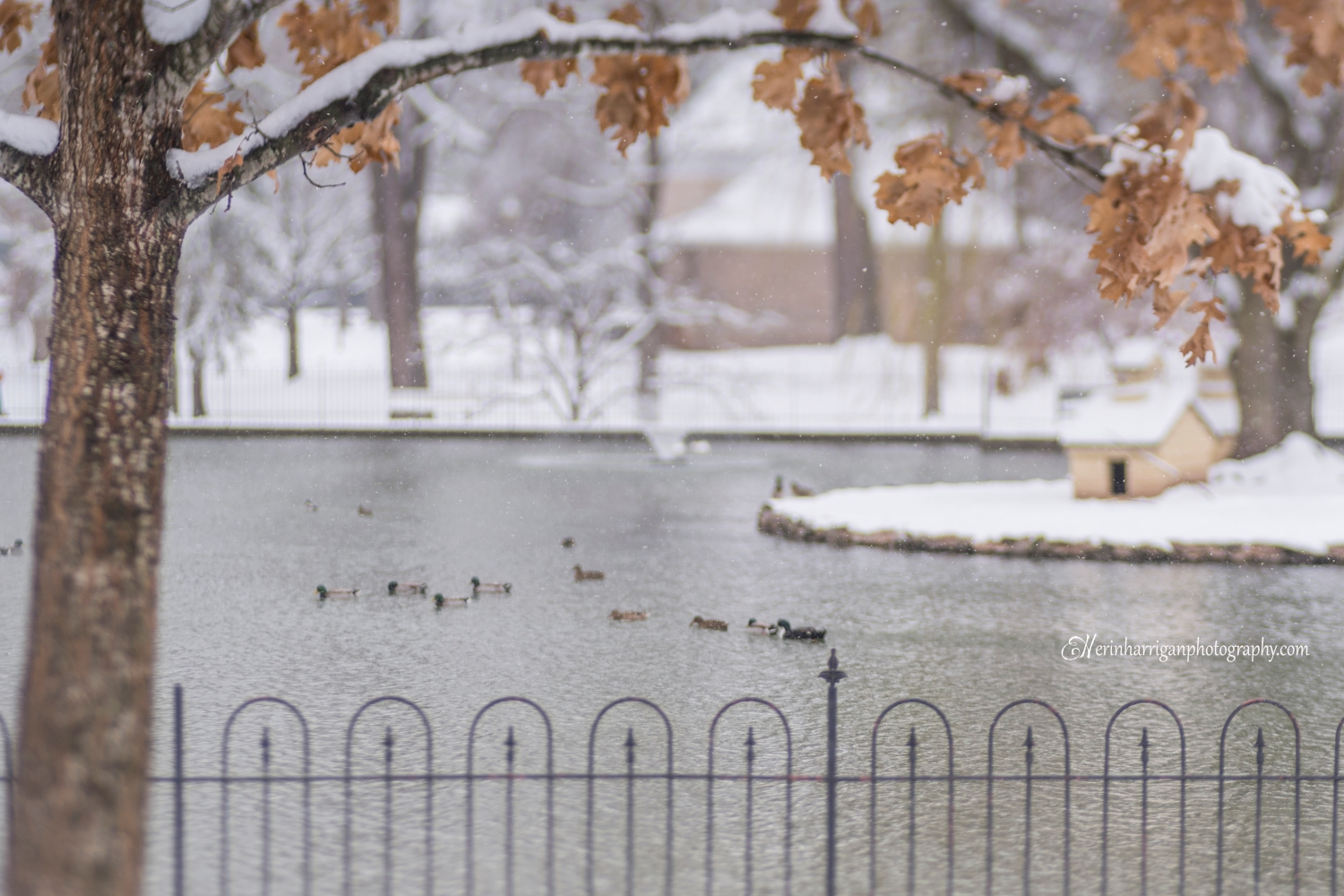 duck pond snow wm