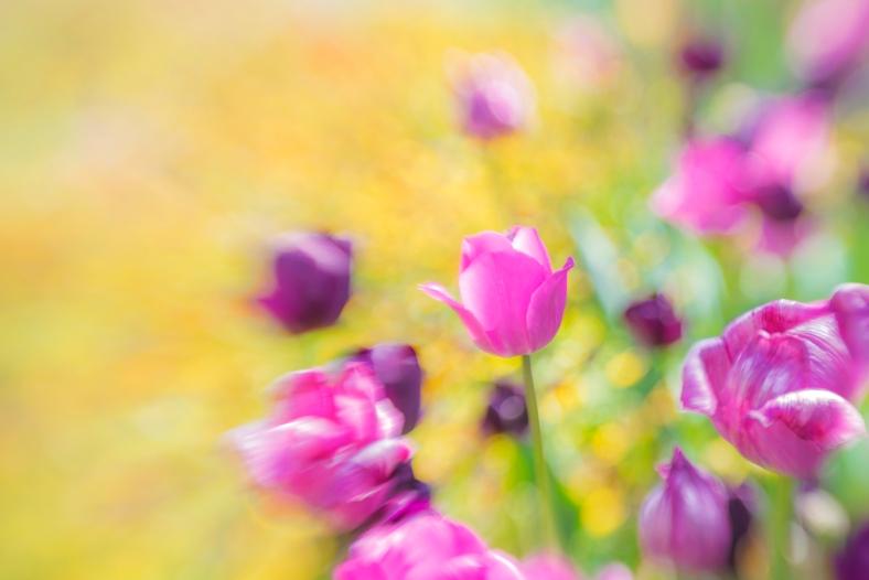 flowers lb1
